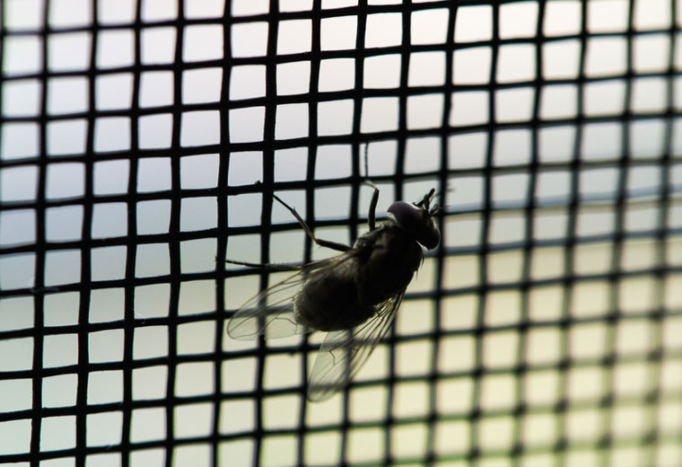Insect Screens Service